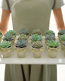 Wedding Gift Plant : ... Succulents: Perfect eco-friendly wedding favors, gifts, centerpieces