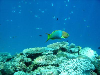 Izu Peninsula Diving