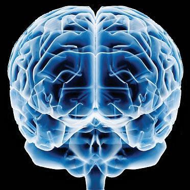 http://4.bp.blogspot.com/_QP999WfFSZM/TLeBRKK0ObI/AAAAAAAAACY/i1KOkEV81PU/s1600/cerebro%5B1%5D.jpg