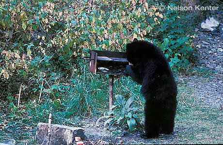 [Image: grilling+bear.jpg]