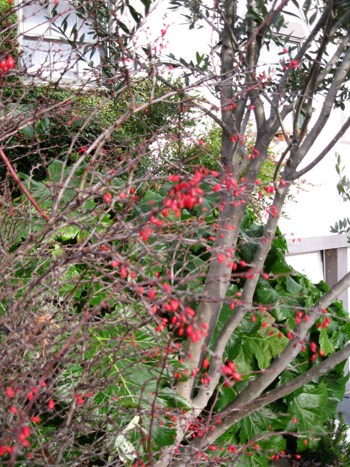 joy of nesting a day of winter gardening