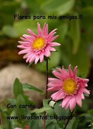 Flores para mis amigos!!!