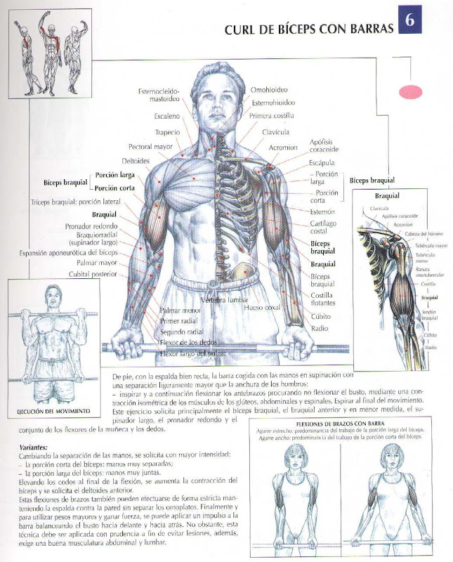 Trabajo sobre los musculos muy completo, espere proxima edicion con  title=
