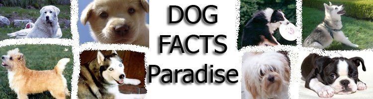 Dog Facts Paradise