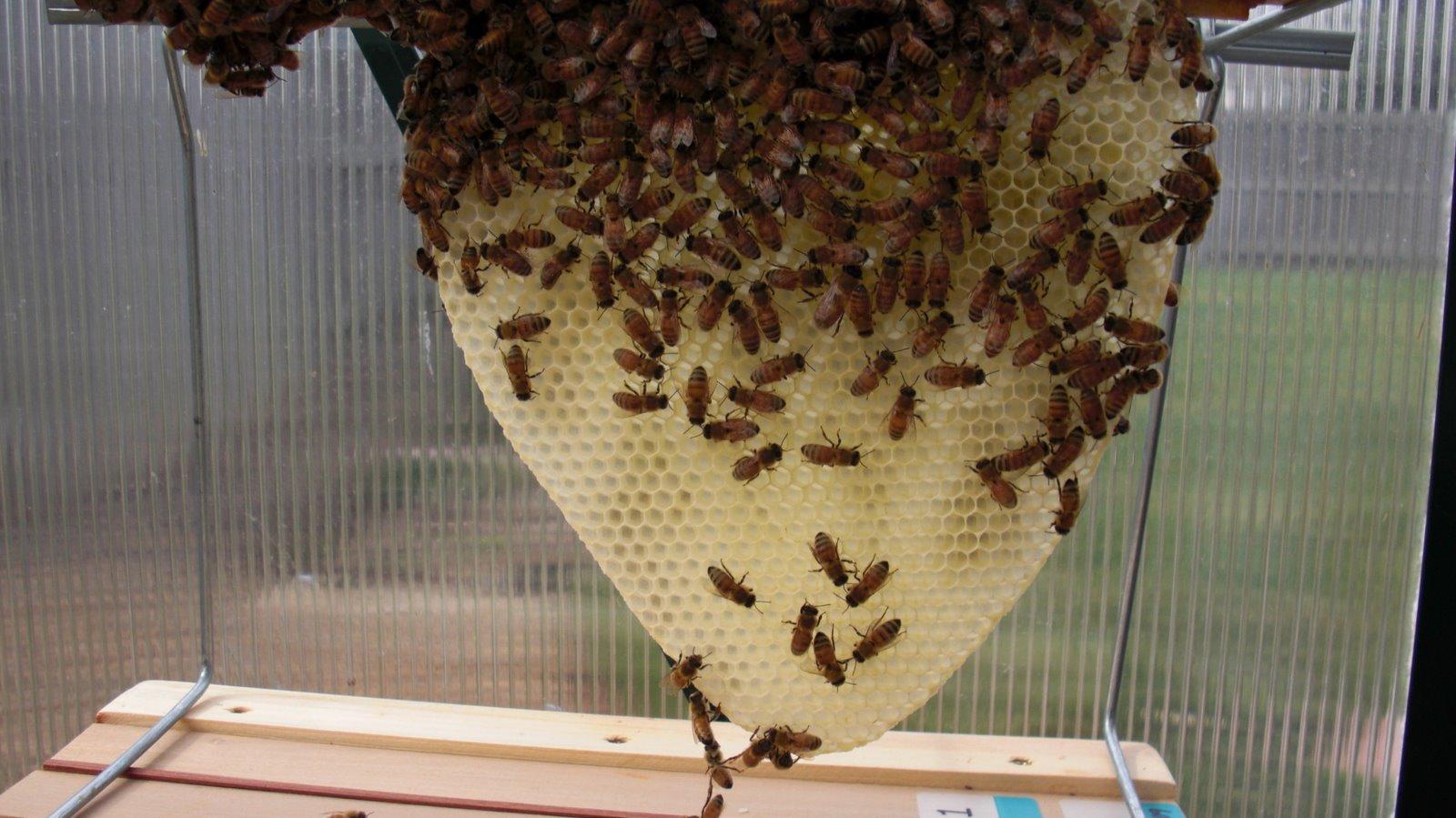 backyard bee hive blog swarm prevention measures