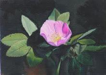 """""""Wild Rose Alberta"""""""