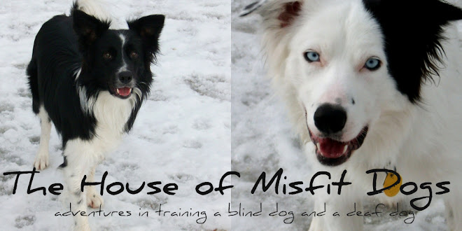 The House of Misfit Dogs