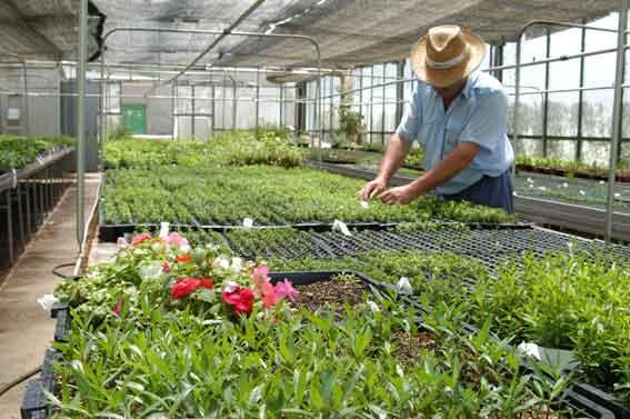De la tierra toda noviembre 2009 for Viveros de jardin