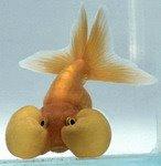 Mas Matador fish