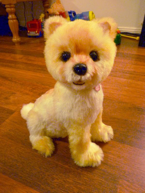 pomeranian white teddy bear