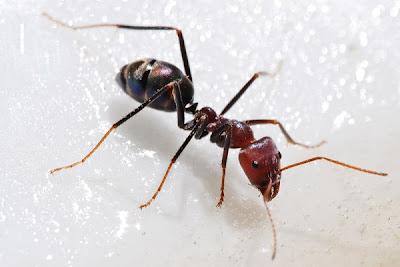 Miere is kleinerige insekte toegerus met n bytorgaan wat meestal in