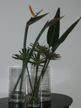 Flor de pájaro y papiros