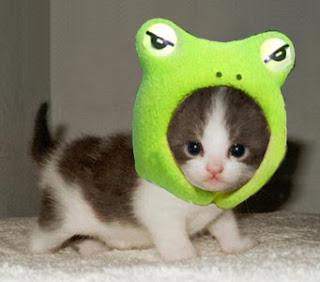 Saye suke kucing ni.. saye ambik gambar kucing ni dari