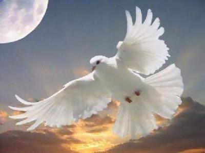 kerdipanbintang: Kisah burung terbang tinggi-tinggi dan