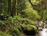 El moho del bosque
