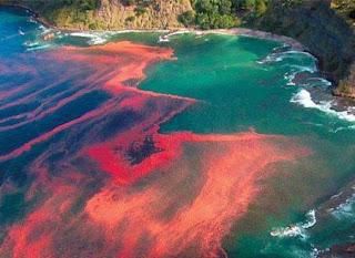 seaturntoblood BP Vazamento no Golfo do México = Chuvas de Óleo na Lousiana