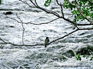 Vermont bird lake