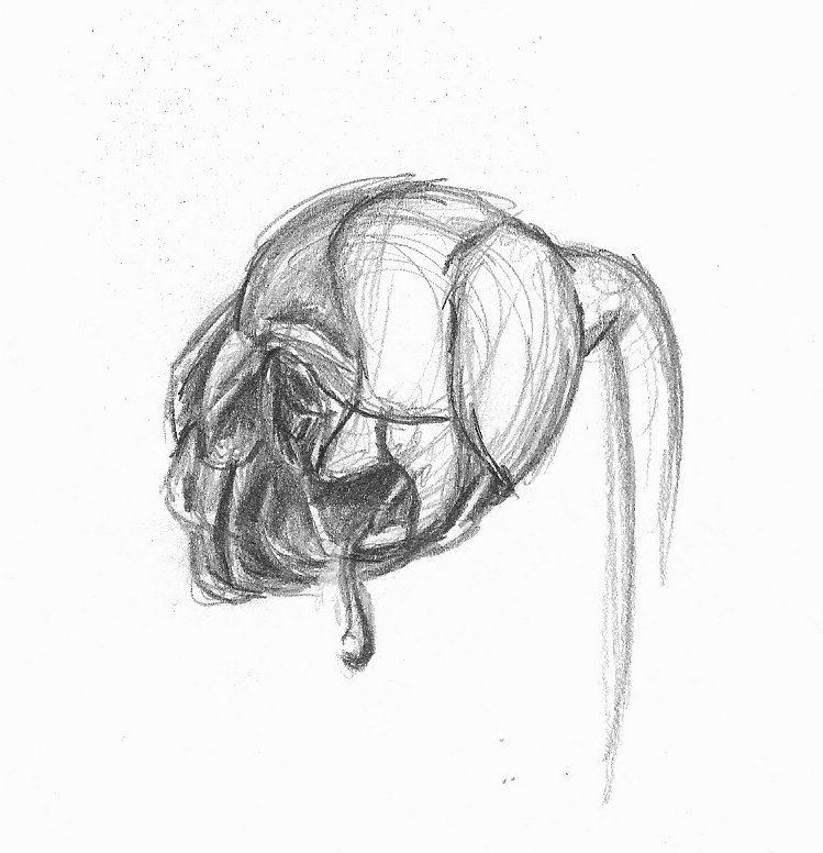 black and white rose drawing.