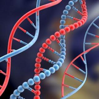 ADN: información basica