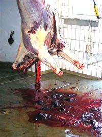 Pools of blood from a carcass in an abattoir