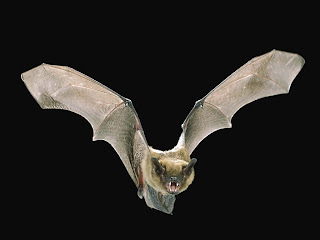 Buraco sem fundo Morcego-voando-5e9b8