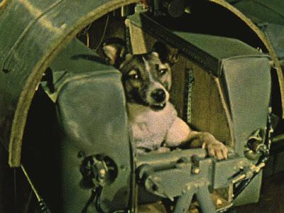 Laika antes de ser enviada al espacio