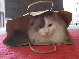 white bicolor ragdoll cat in a paper bag