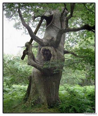 Serem banget ni pohon.