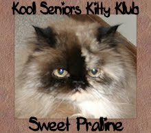 Kool Seniors Kitty Klub