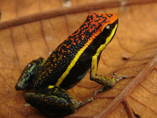 New+species+ +sebuah+catatan+%289%29 Binatang binatang Menakjubkan Asal Hutan Amazon