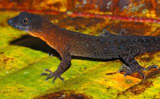 New+species+ +sebuah+catatan+%2812%29 Binatang binatang Menakjubkan Asal Hutan Amazon