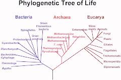 El Arbol Filogenetico
