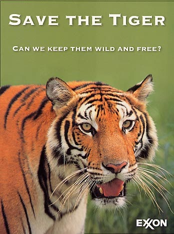 saving tigers essay Tiger: an endangered species that should tigers are distinguished by the color of their coat although there essays related to tiger: an endangered species t 1.