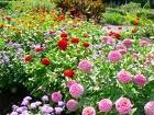 avatare cu flori de primavara