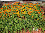Zinnia Garden/Day Lillies