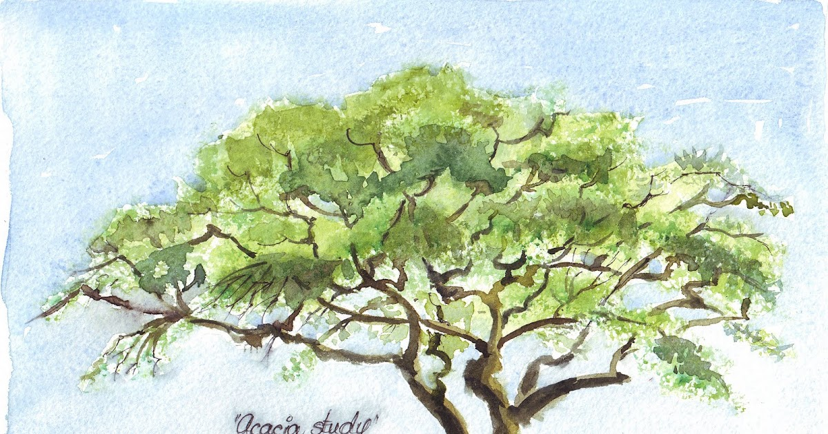 Sketching In Nature Thorn Tree Maree