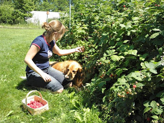 This dog digs raspberries.