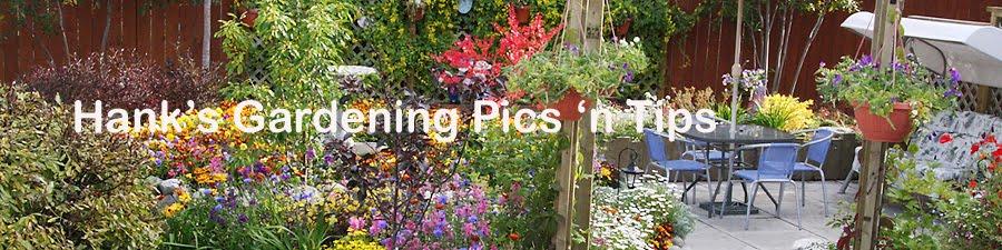 Hank's Gardening Pics 'n Tips