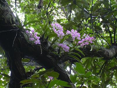 Orquídeas habitadas