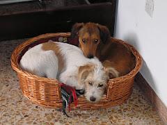 Birus y Pisco