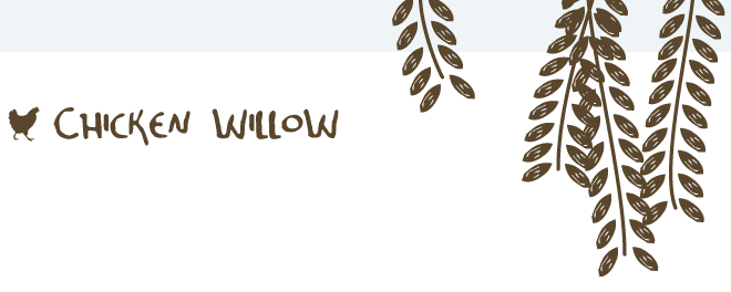 Chicken Willow