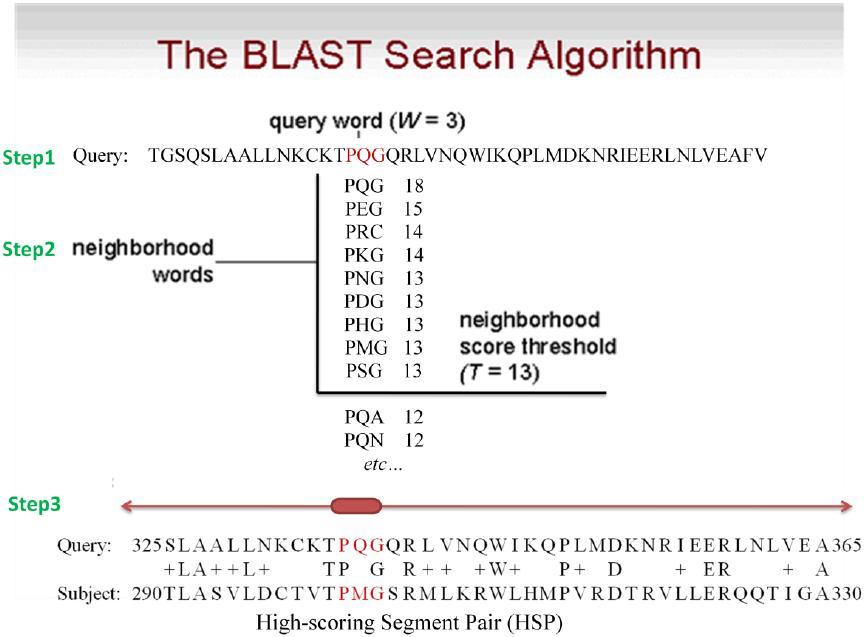 BLAST Basic Local Alignment Search T - NDSU