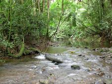 Um dos Rios da Reserva