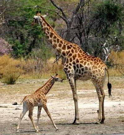 http://4.bp.blogspot.com/_QtH2zTVl70M/THOeUO8GeYI/AAAAAAAAIw0/_rJd9f7DxD4/s1600/animal-safari09.jpg