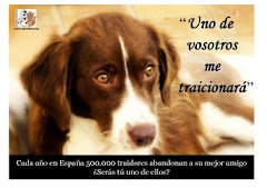 No los abandones!!!