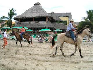 Horses in Sayulita