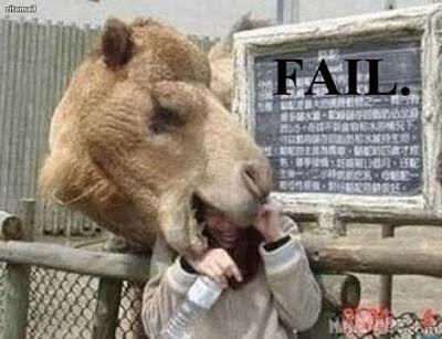 Strange camel