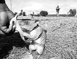 非洲 探雷鼠 - 非洲探雷鼠小隊