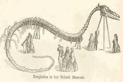 海洋巨蟒 - 海洋巨蟒之謎
