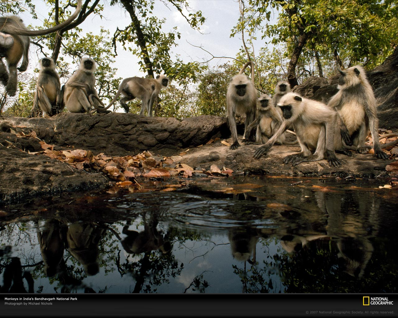 Bandhavgarh India  city photos gallery : National Geographic: Photo of the Day: 12/01/07